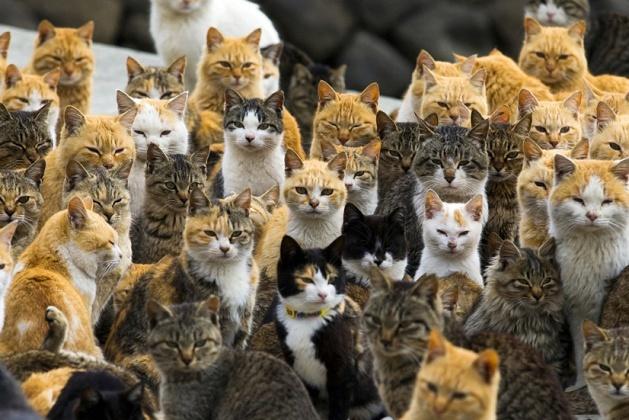 japanese-cat-island-01-630x420