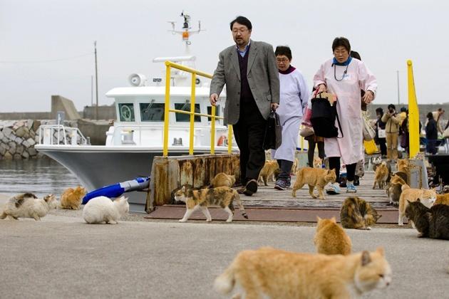 japanese-cat-island-02-630x420