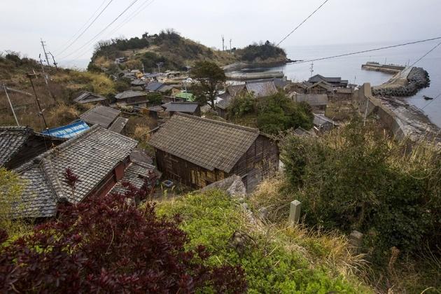 japanese-cat-island-03-630x420