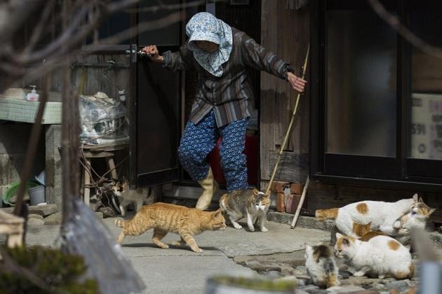 japanese-cat-island-04-630x420