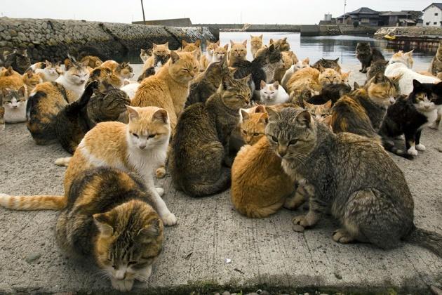 japanese-cat-island-06-630x420
