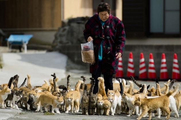 japanese-cat-island-07-630x420
